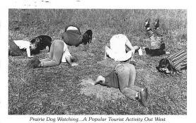 top010185 - Prairie Dogs