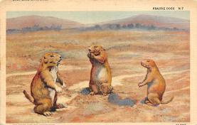 top010187 - Prairie Dogs