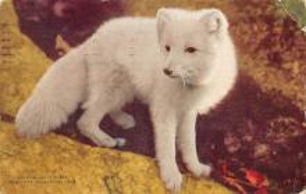 top010197 - Hyena/Wolf/Coyote