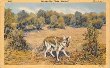 top010213 - Hyena/Wolf/Coyote
