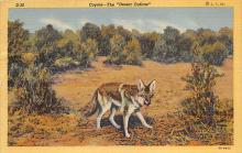 top010223 - Hyena/Wolf/Coyote