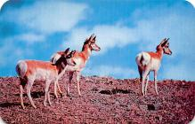 top010253 - Misc Animals