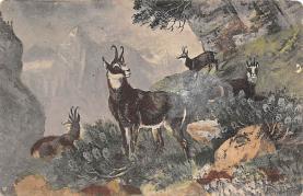 top010297 - Misc Animals