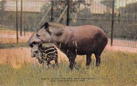 top010299 - Misc Animals