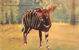 top010311 - Misc Animals