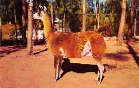 top010313 - Misc Animals