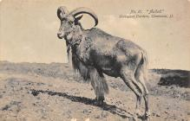 top010329 - Misc Animals