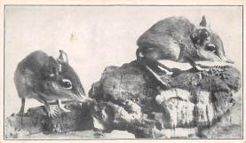 top010333 - Misc Animals