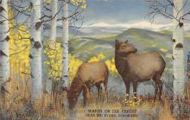 top010349 - Misc Animals
