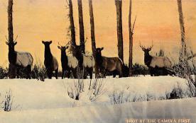 top010357 - Misc Animals