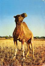 top010397 - Misc Animals