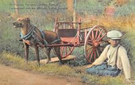top010521 - Horse Drawn