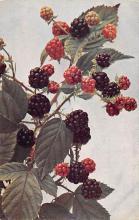 top013959 - Fruit Assorted
