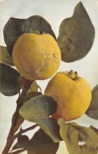 top013973 - Fruit Assorted