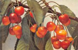 top013977 - Fruit Assorted