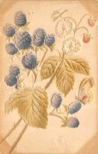 top013997 - Fruit Assorted