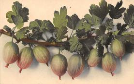 top014007 - Fruit Assorted