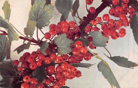 top014043 - Fruit Assorted