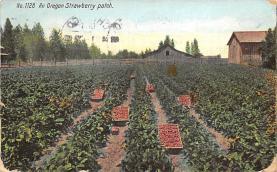 top014061 - Fruit Assorted