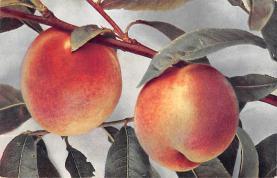 top014073 - Fruit Assorted