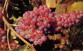 top014083 - Fruit Assorted
