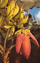 top014085 - Fruit Assorted