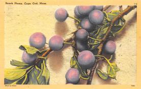 top014093 - Fruit Assorted