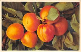 top014099 - Fruit Assorted