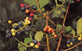 top014101 - Fruit Assorted