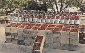 top014113 - Fruit Assorted