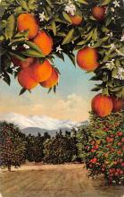 top014141 - Fruit Assorted