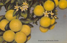 top014149 - Fruit Assorted