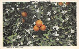 top014179 - Fruit Assorted