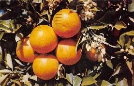 top014183 - Fruit Assorted