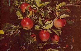 top014201 - Fruit Assorted
