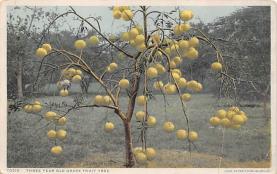 top014203 - Fruit Assorted