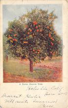 top014205 - Fruit Assorted