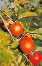 top014209 - Fruit Assorted