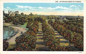 top014213 - Fruit Assorted