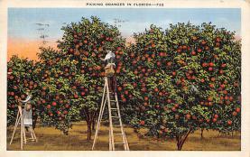 top014215 - Fruit Assorted