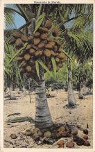 top014223 - Fruit Assorted