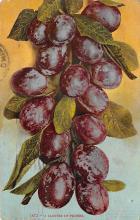 top014227 - Fruit Assorted