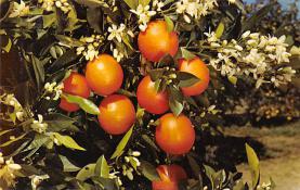 top014229 - Fruit Assorted