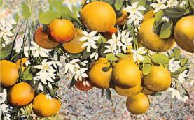 top014233 - Fruit Assorted