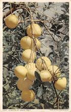 top014243 - Fruit Assorted
