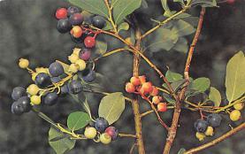 top014263 - Fruit Assorted