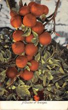 top014267 - Fruit Assorted