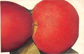 top014281 - Fruit Assorted