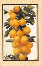 top014283 - Fruit Assorted