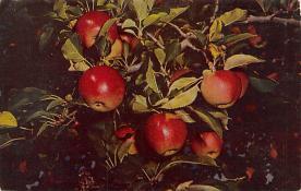 top014295 - Fruit Assorted